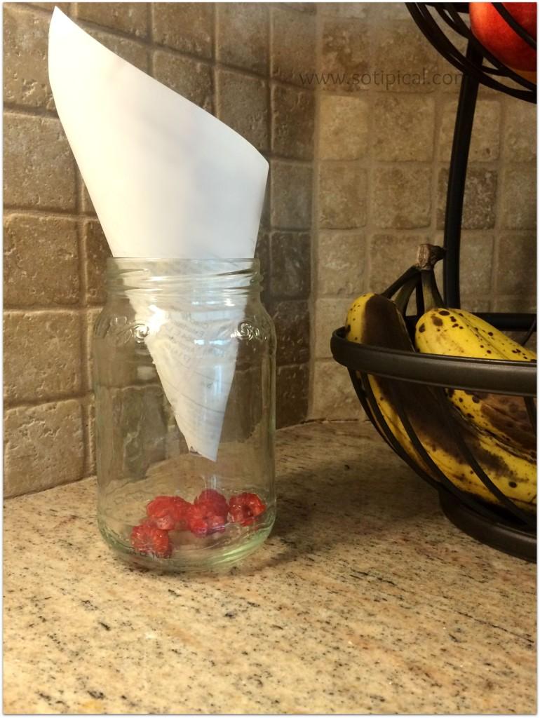 avoid fruit flies fruit jar cone