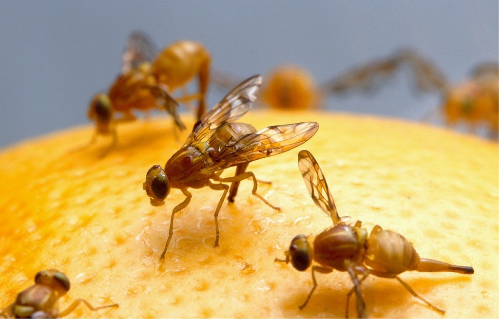 How to Avoid Fruit Flies