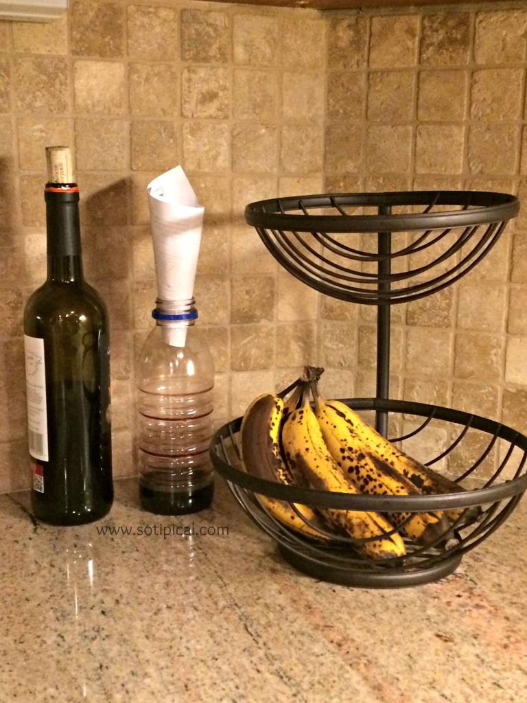 avoid fruit flies red wine